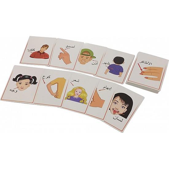 Flashcards - body parts